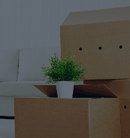 Best movers San Diego